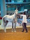 Saint petersburg russia th may a grey breed trotter s stallion competes in the international exhibition in Stock Image