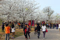 Sakura beijing yuyuantan beautiful cherry blossoms Royalty Free Stock Images