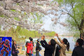 Sakura beijing yuyuantan beautiful cherry blossoms Royalty Free Stock Image