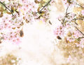 Sakura blossoms background with cherry collage Stock Photo