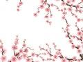 Sakura blossoms background. EPS 10