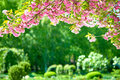 Sakura blossoms in a flower garden, beautiful spring landscape at bright day