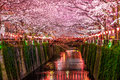 Sakura Canal Royalty Free Stock Photo