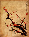 Sakura, cherry blossom plum chinese brush painting Royalty Free Stock Photo