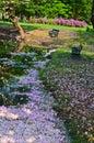 Sakura floating in the stream Royalty Free Stock Photo