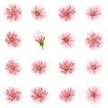 Sakura flowers icon set isolated. EPS 10