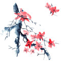 Sakura. Flowers illustration.. Royalty Free Stock Photo