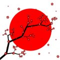 Sakura flowers with japan flag on background Royalty Free Stock Photo