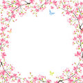 Sakura frame Royalty Free Stock Photography