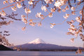 Sakura & Mt Fuji Royalty Free Stock Photo