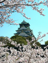 Sakura and Osaka Castle Royalty Free Stock Photography