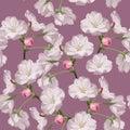 Sakura. Seamless pattern. Pink Cherry blossom branches. Spring botanical illustration.