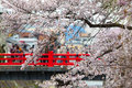 Sakura season trip branches of a cherry tree at in spring and people walking on a traditional japanese red bridge at the Stock Photos