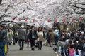 Sakura season in ueno park people look at of japan Royalty Free Stock Photography