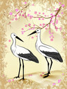 Sakura and stork Stock Photos