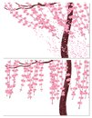 Sakura in the wind and in calm weather. Branches with pink flowers and cherry buds, the trunk of a tree. isolated on