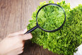 Salad is examined with magnifying glass Royalty Free Stock Image