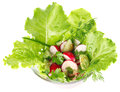 Salad of fresh vegetable and greenery Royalty Free Stock Images