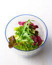 Salad green leaf in a bowl Stock Photos