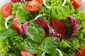 Salad healthy on plate closeup Royalty Free Stock Photo