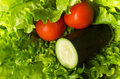 Salad ingredients fresh green lettuce tomato and cucumber Stock Photos