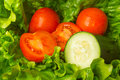 Salad ingredients fresh green lettuce tomato and cucumber Royalty Free Stock Image