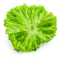 Salad. Lettuce isolated on white Royalty Free Stock Photo