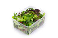 Salad mix in a box. Royalty Free Stock Photo