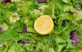 Salad mix with rucola frisee radicchio and lemon lettuce Royalty Free Stock Images