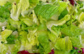 Salad mix with rucola frisee radicchio and lettuce Stock Photos