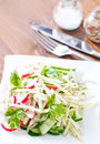 Salad with radish and cucumber Royalty Free Stock Photos