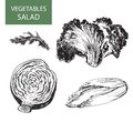 Salad set of vector illustration hand drawing Stock Photography