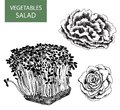 Salad set of vector illustration hand drawing Royalty Free Stock Photos