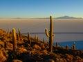 Salar de uyuni incahuasi island in the middle of and it s cactus vegetation salt flat Stock Images