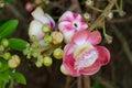 Salavan Tree Flowers