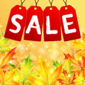 Sale of the autumn announcement on a background yellow maple leaves background Stock Images