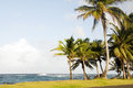 Sallie Peachie beach palm trees Corn Island Stock Photography