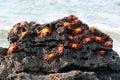 Výpad kraby galapágy