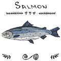 Salmon Fish for Fishing Club or Seafood Sushi Menu. Vector Illustration Isolated On a White Background Doodle Cartoon
