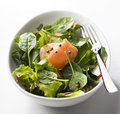 Salmon salad Royalty Free Stock Image