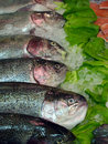Salmons Stock Photos