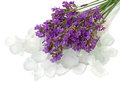 Salt bath with lavender. Stock Image