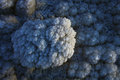 Salt Crystals From Dead Sea