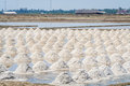 Salt evaporation ponds the harvest times of in in thailand Royalty Free Stock Photography
