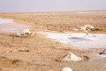 The salt lake of Chott el-Jerid in Tunisia Royalty Free Stock Photo