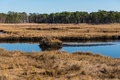 Salt marshes in autumn on a crisp autmn day Royalty Free Stock Photo