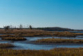 Salt marshes with blue water some vegetation and weeds in autumn Stock Image