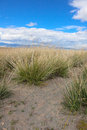Salt steppe lifeless scorched earth Royalty Free Stock Photo