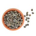 Salted capers in a terracotta bowl and loose over white background Stock Images