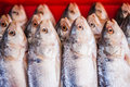 Salted fish being sold at market Royalty Free Stock Images
